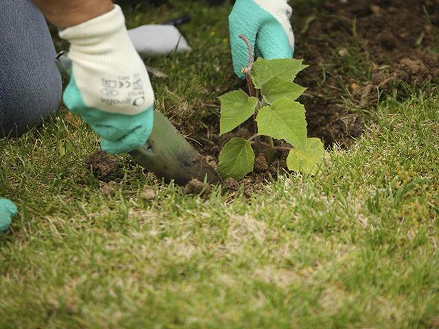 Nuevo convenio para impulsar las acciones de reforestación en el municipio
